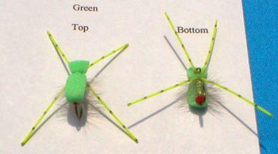 Wilson's Sponge Spider - Green