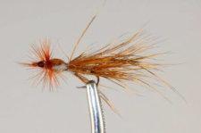 HMM Bug, Golden Brown