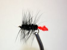 Wooly Worm Black and Red