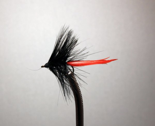 Black and Red Gnat