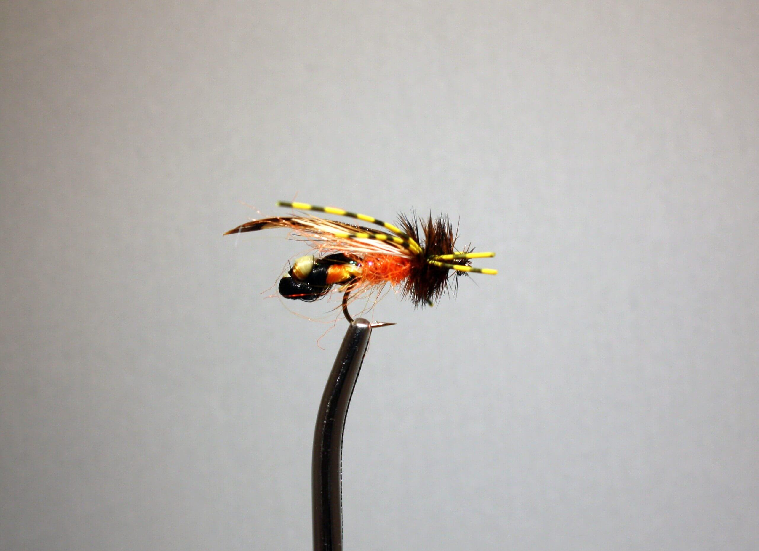 Field's Cockroach