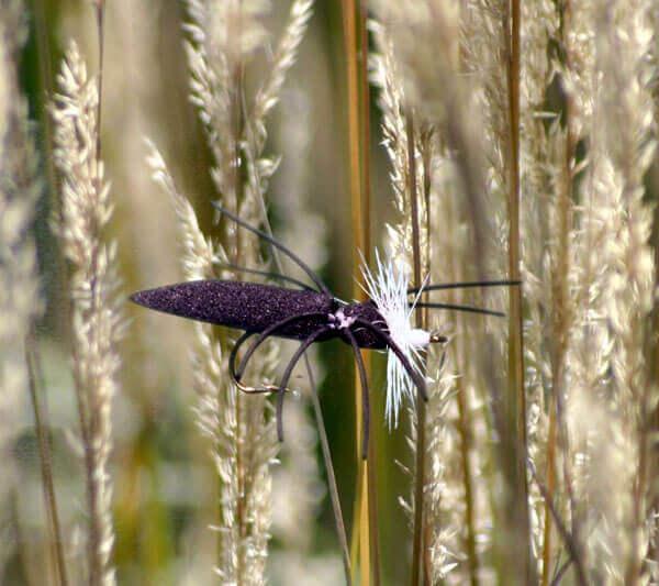 Narrow Body Dry Spider Black