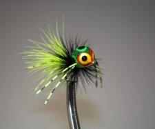 Rollie Pollie Bug