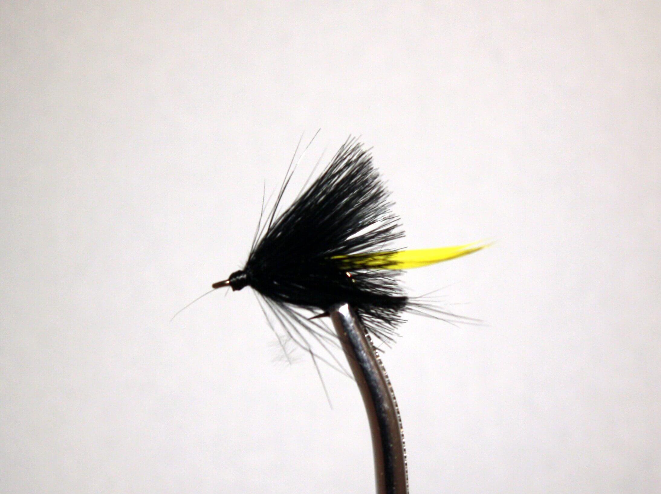 Black and Yellow Gnat