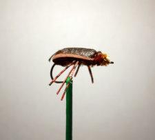 Cicada Bass Fly