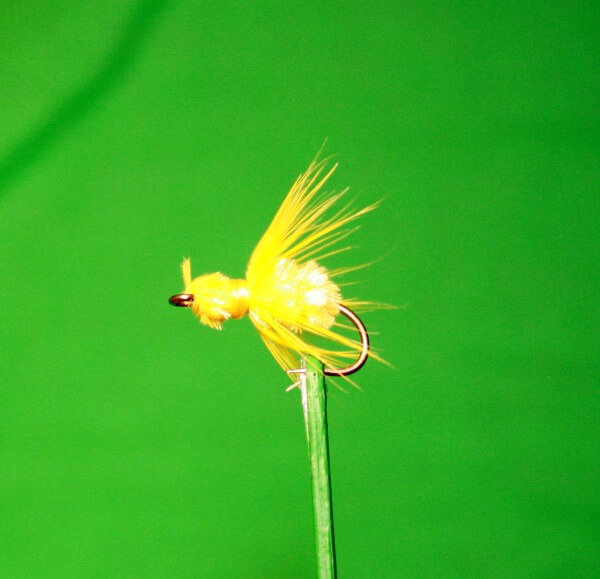 Fat Gnat Yellow