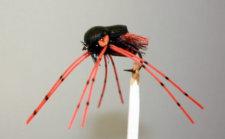 Conrad's 17 Year Cicada