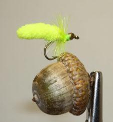 Green Oak Worm Pearson
