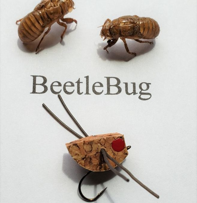 Cicada's Are Back